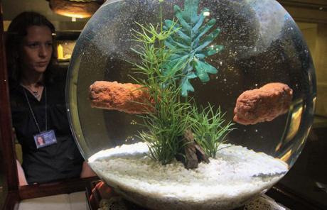 Fish-bowl_1422751c